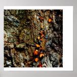 Hiedra en corteza de árbol poster