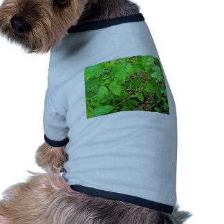 Hiedra venenosa con las flores camisas de perritos