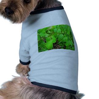 Hiedra venenosa camisa de perro