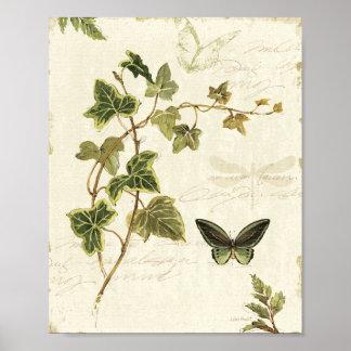 Hiedras y mariposas posters