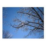 Hielo que brilla y árboles nevados tarjetas postales