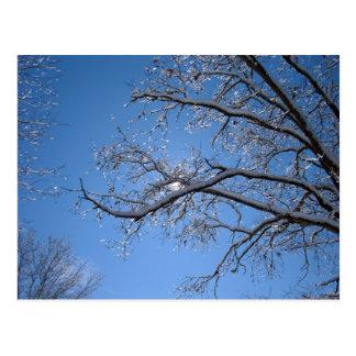Hielo que brilla y árboles nevados tarjeta postal