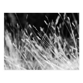 Hierba alta negra y blanca postal