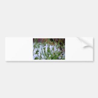 Hierba congelada del invierno etiqueta de parachoque