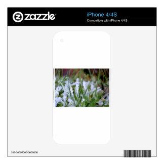 Hierba congelada del invierno skins para eliPhone 4
