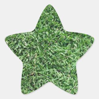 Hierba de búfalo pegatina en forma de estrella