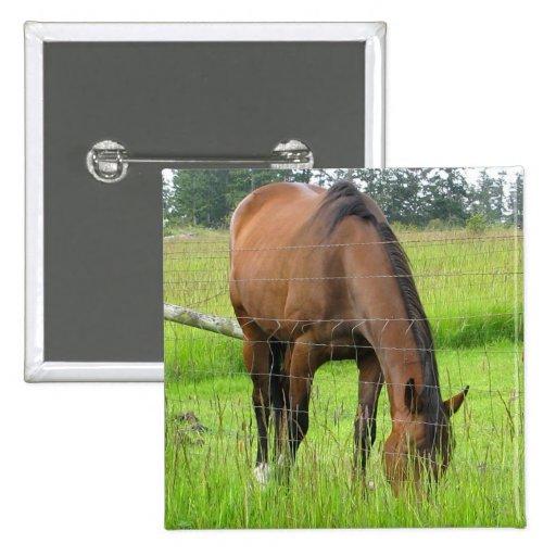 Hierba de Eatting del caballo de Brown en un campo Pin Cuadrada 5 Cm
