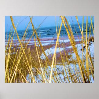 Hierba de la duna del lago Michigan Póster