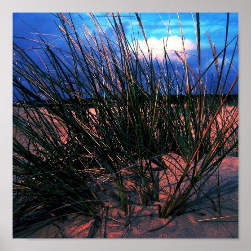 Hierba de la duna impresiones