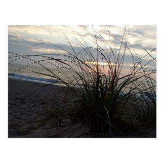 Hierba de la playa en el amanecer postal