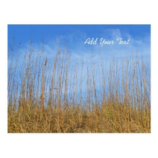 Hierba de la playa postales