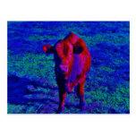 Hierba de la púrpura de la vaca del bebé postales