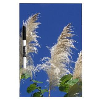 Hierba de pampa en la floración pizarras