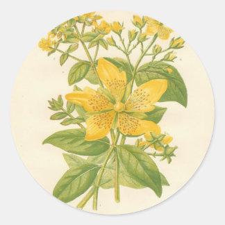 Hierba de San Juan florecida grande, impresión Etiquetas Redondas