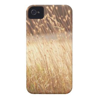 Hierba del campo de la puesta del sol del verano iPhone 4 Case-Mate cárcasa