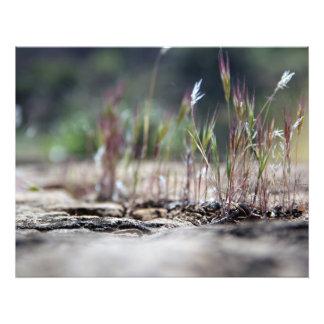 Hierba del desierto
