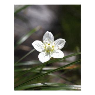 Hierba del pantano de Parnassus (palustris del Membretes Personalizados