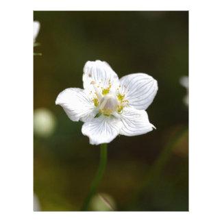 Hierba del pantano de Parnassus (palustris del Plantillas De Membrete