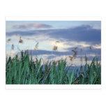 hierba del pantano tarjeta postal