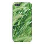 Hierba del trigo iPhone 5 cárcasa