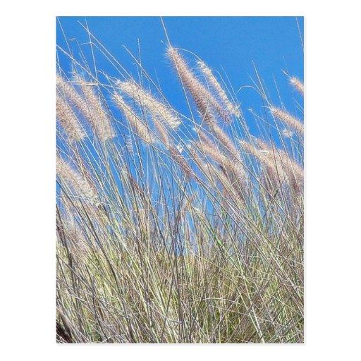 Hierba en el viento postal