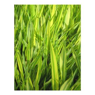 "hierba folleto 8.5"" x 11"""