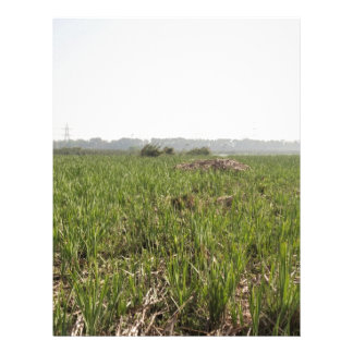 Hierba fresca y secada en el refugio de aves de Ok Plantilla De Membrete