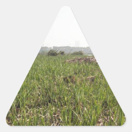 Hierba fresca y secada en el refugio de aves de Ok Calcomanías Trianguladas Personalizadas