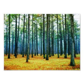 Hierba hermosa del amarillo del bosque del árbol d cojinete