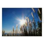 Hierba hermosa Notecard de la mañana Felicitación