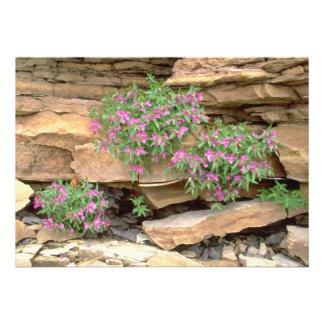 Hierba hojosa rosada del sauce Territori del noro Anuncio