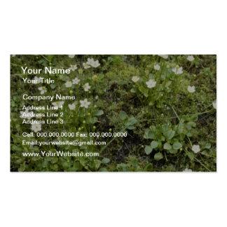 Hierba--Parnassus (Parnassia Glauca) de las flores Tarjeta De Visita