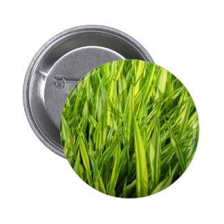 hierba pins