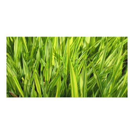 hierba plantilla para tarjeta de foto