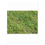 Hierba verde corta postal