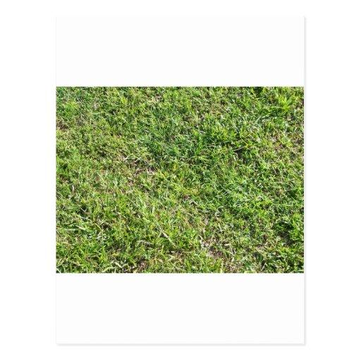 Hierba verde corta tarjeta postal