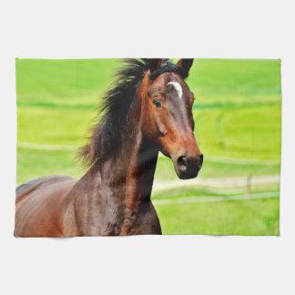 Hierba verde del caballo agraciado de Brown Toallas De Cocina