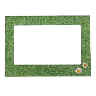 Hierba verde foto de imanes