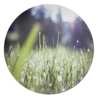 Hierba verde plato para fiesta