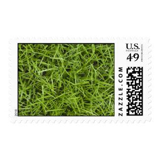 Hierba verde sellos
