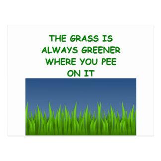 hierba verde tarjeta postal