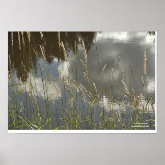 Hierba y agua póster