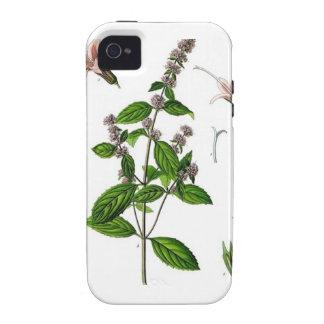 Hierbabuena Vibe iPhone 4 Funda