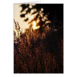 Hierbas de pradera en la tarjeta de los Naturaleza