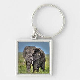Hierbas del elefante africano y de la sabana llavero cuadrado plateado