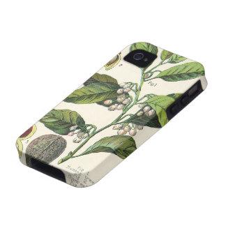 Hierbas especia semillas de la comida del vintage Case-Mate iPhone 4 funda