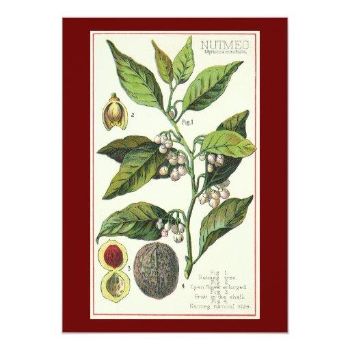 """Hierbas especia, semillas de la comida del vintage invitación 5"""" x 7"""""""