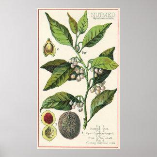 Hierbas especia, semillas de la comida del vintage póster