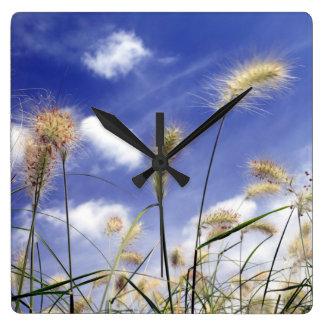 Hierbas plumosas contra un cielo del verano reloj cuadrado