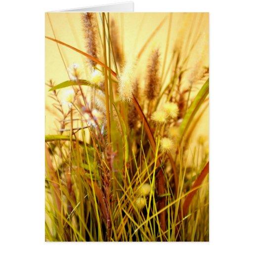 Hierbas salvajes secadas del otoño tarjetón